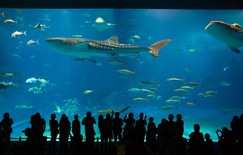 Плавать нельзя воздержаться или где поплавать с китовыми акулами?