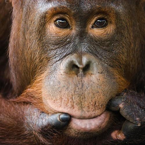 Малайзия: всё лучшее & Камбоджа