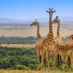 амбосели и масай мара