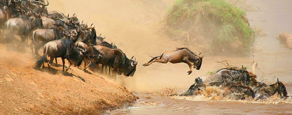 сафари-тур в кению